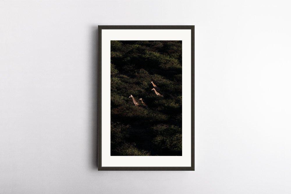 Prints for Wildlife Print by @ladyvenom Marion Payr