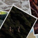 Prints for Wildlife fundraiser by @ladyvenom and @pie_aerts