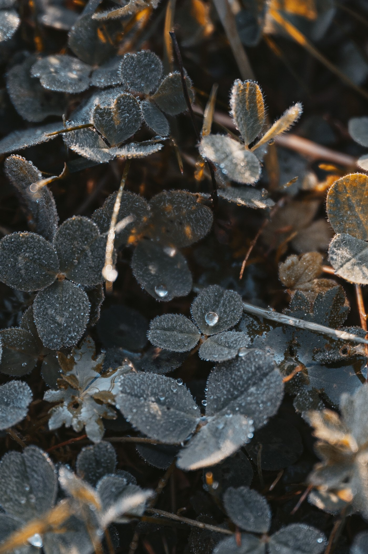 Treading in dew in East Tyrol - part of mindful mountain experiences