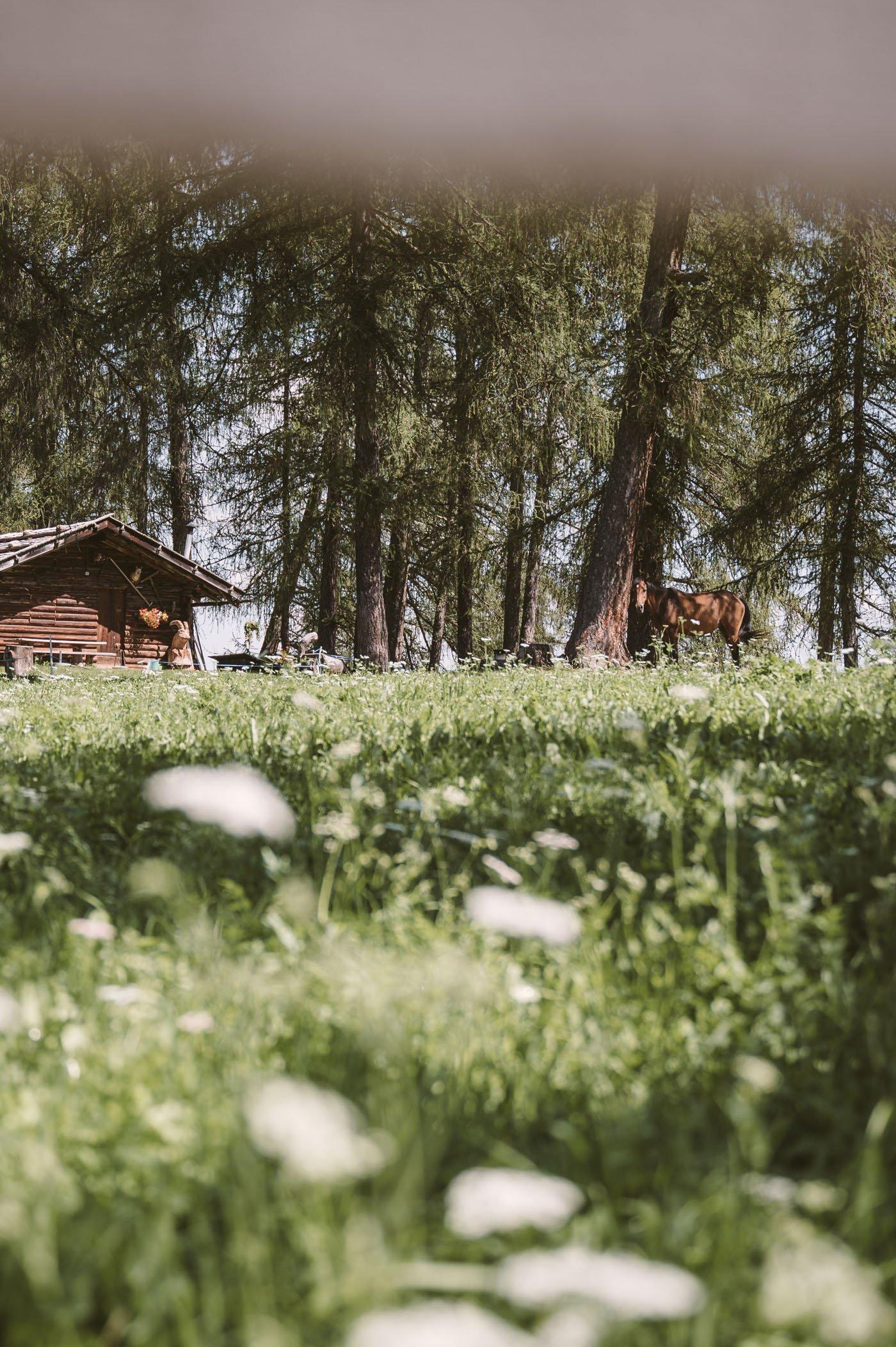 Salten in San Genesio South Tyrol