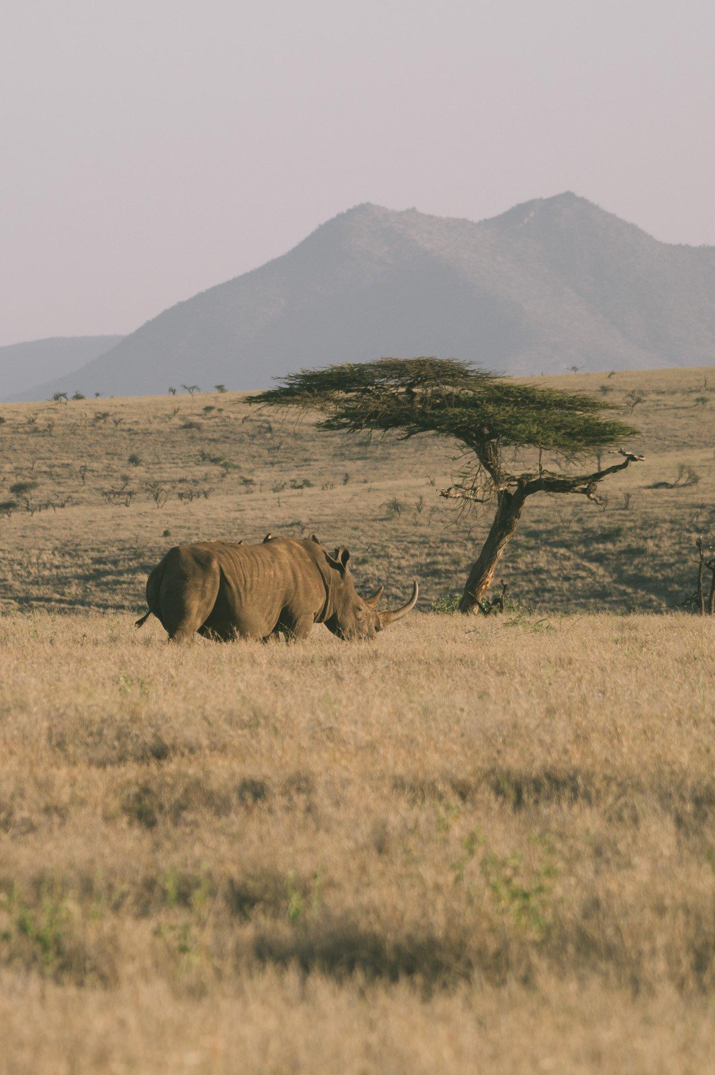 Rhino at Lewa Conservancy Kenya