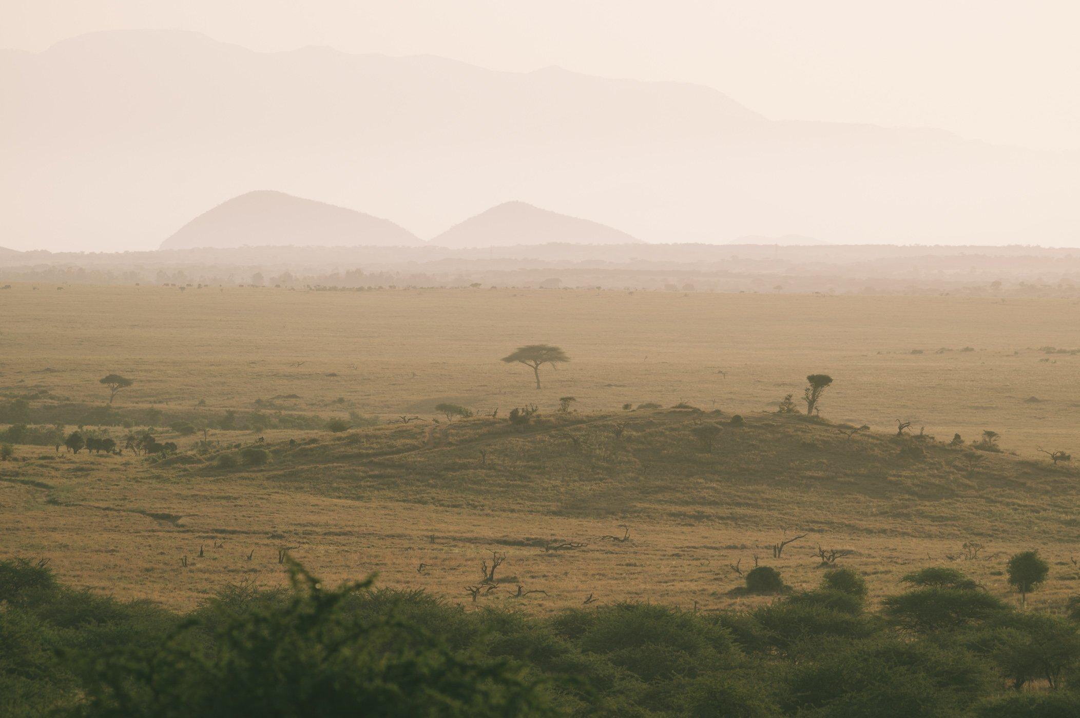 Lewa Conservancy Kenya