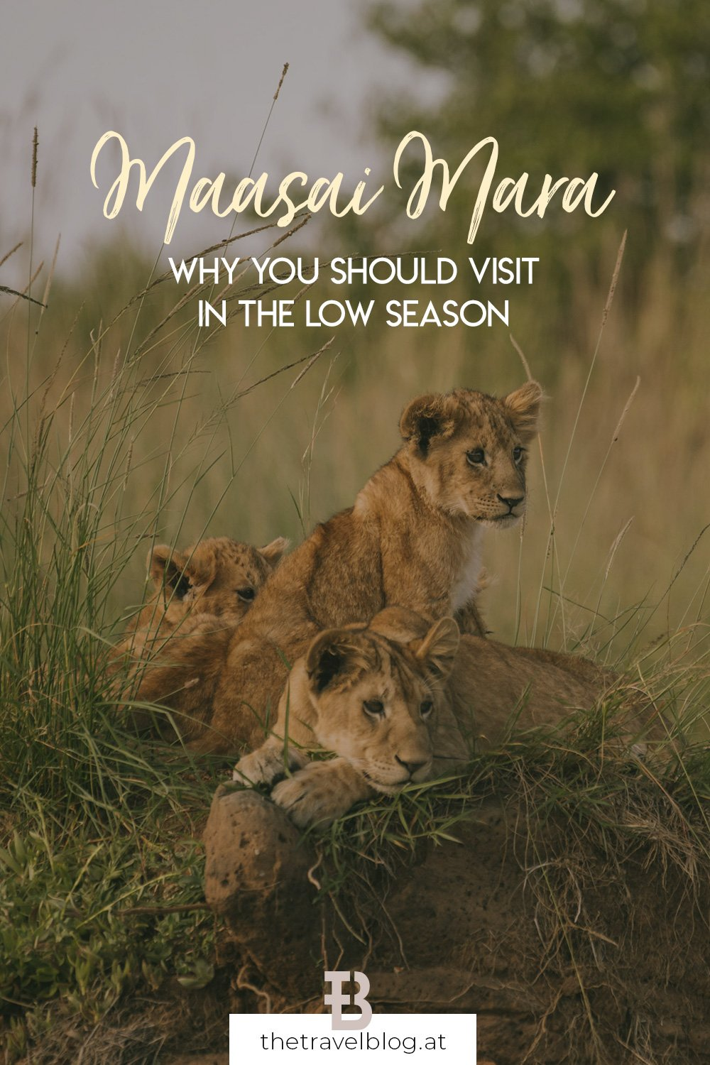 Why you should visit the Maasai Mara in the low season and where to stay locally