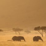 Elephants in the Mara Triangle in Kenya