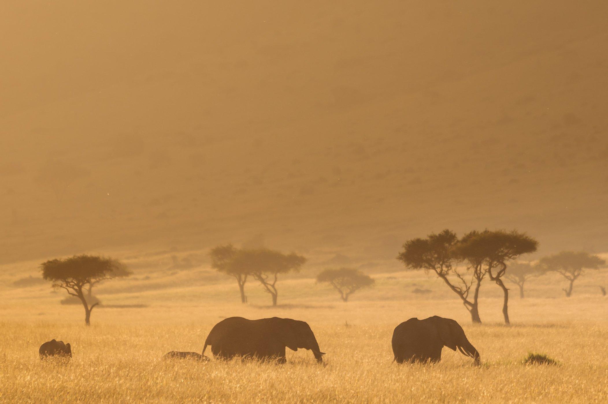 Elephants in the Mara Triangle in Kenya