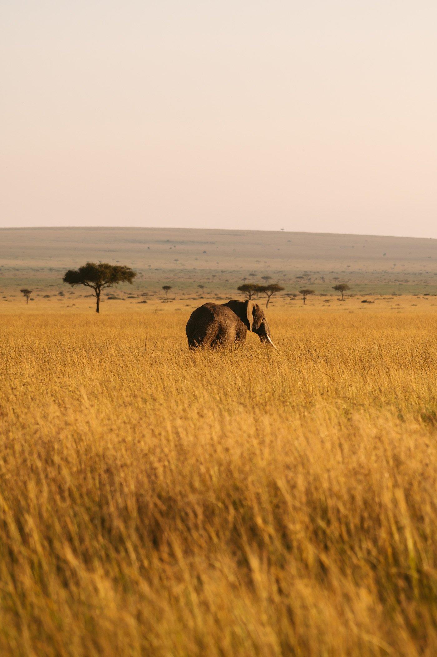 Elephant in the Mara Triangle in Kenya