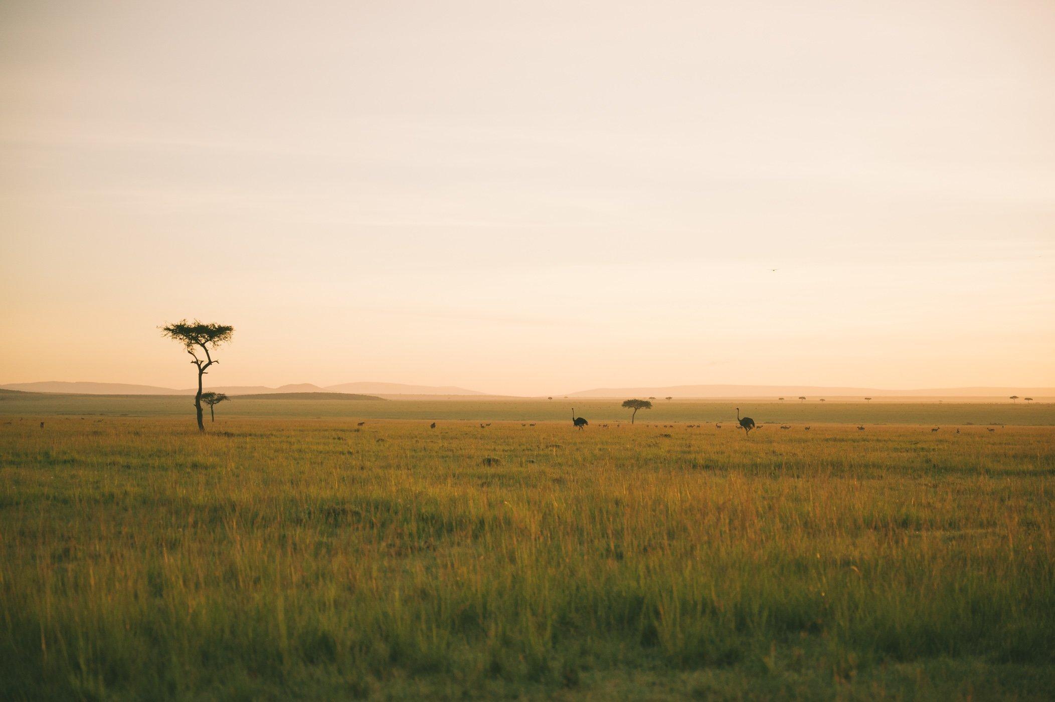 The plains of the Maasai Mara in Kenya in January