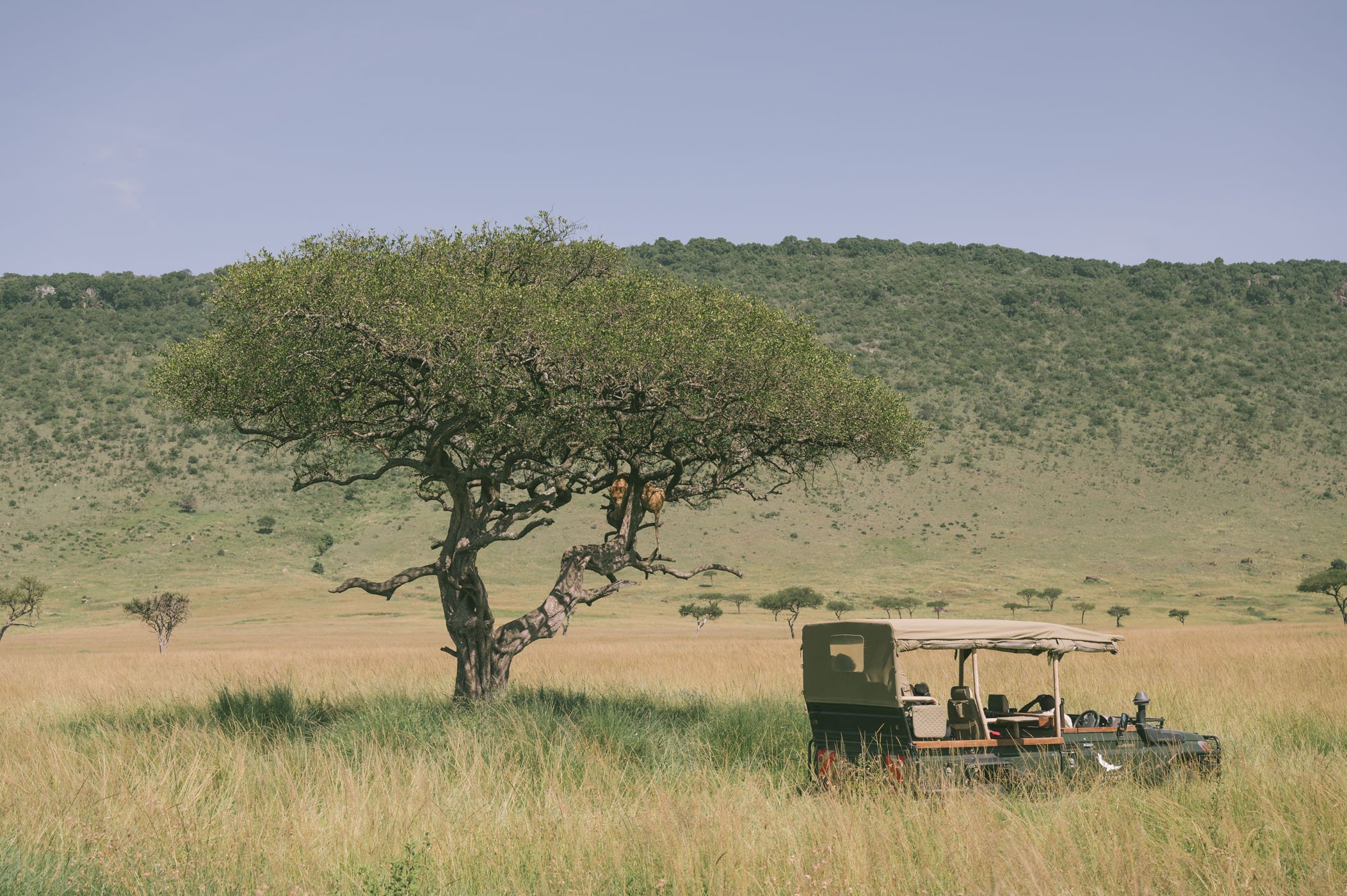 An andBeyond safari vehicle in the Mara Triangle next to the tree-climbing lions