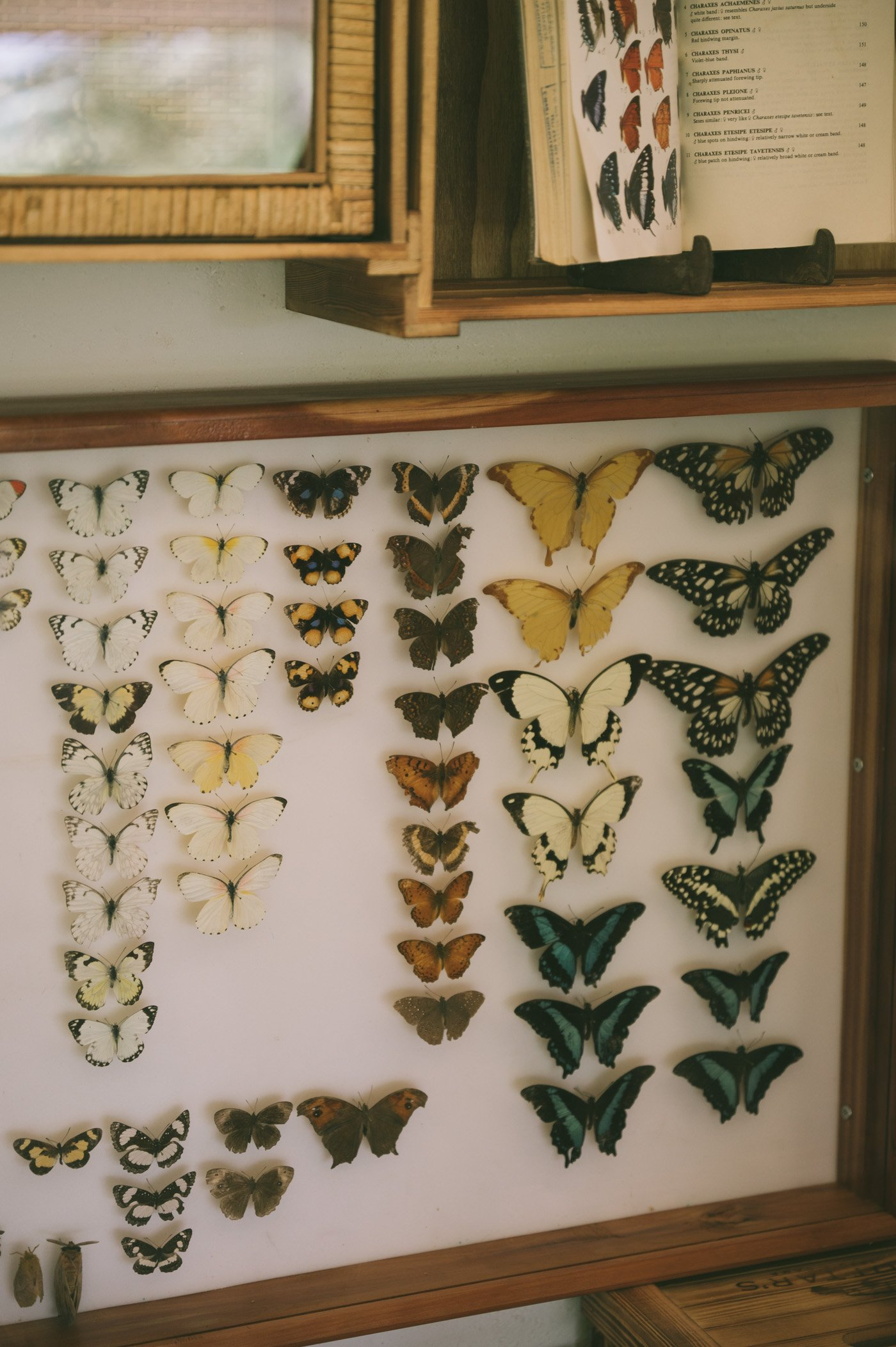 Butterfly collection at the new Explorer's tent at Cottar's 1920s camp in Kenya