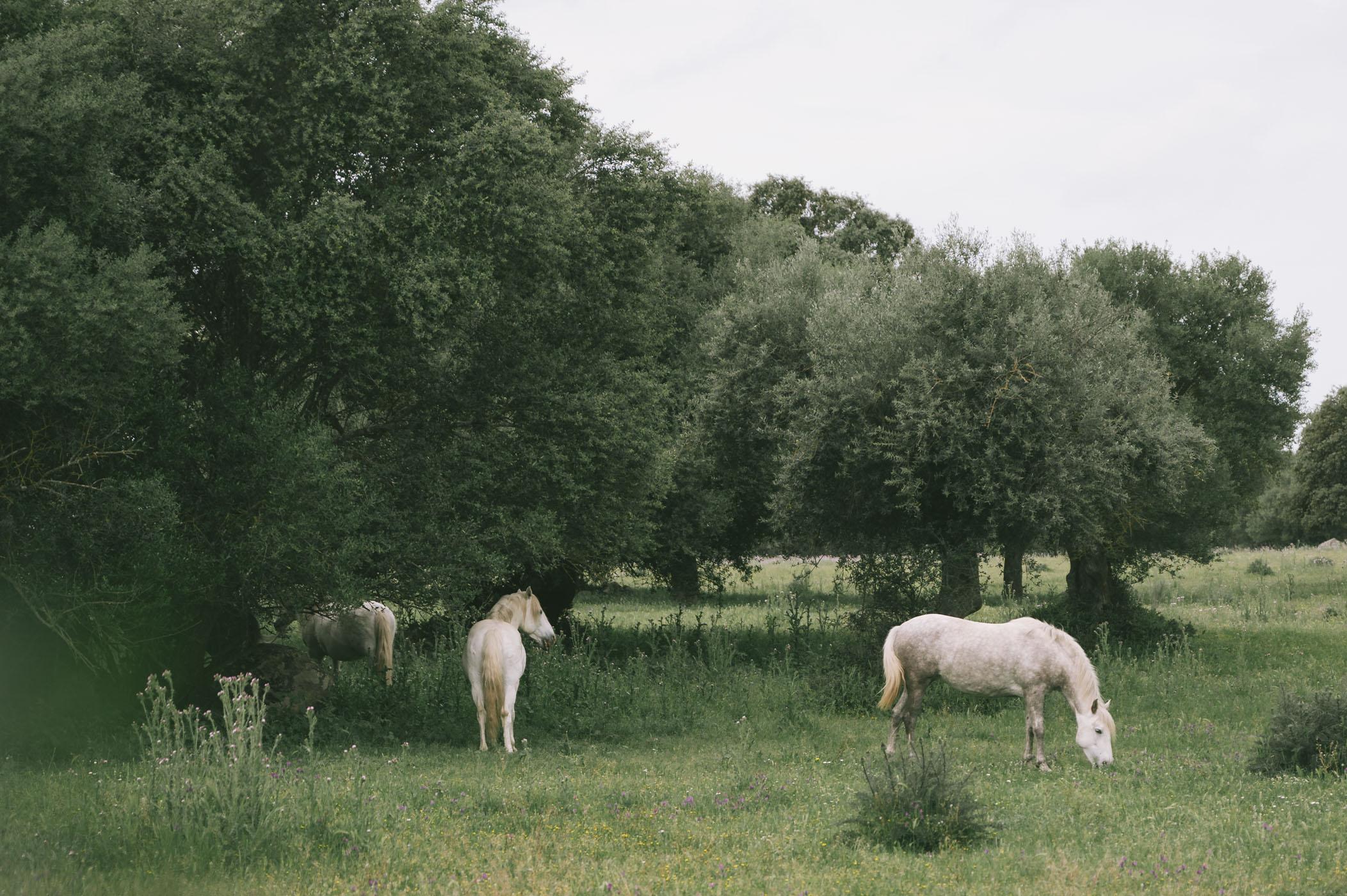 Horses on the estate of São Lourenço do Barrocal in the Alentejo region of Portugal