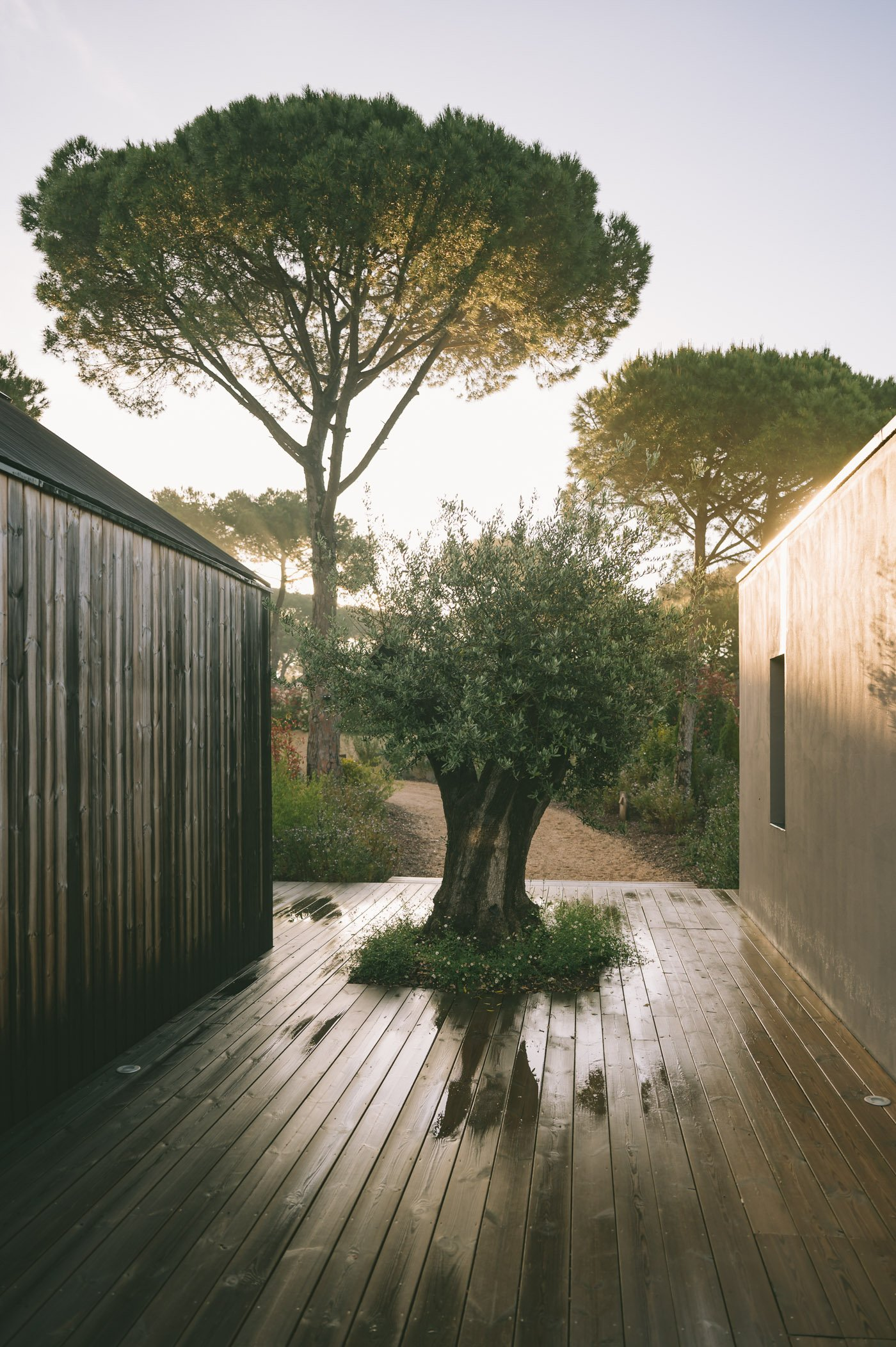 Our villa at Sublime Comporta after a short nightly rain in April.