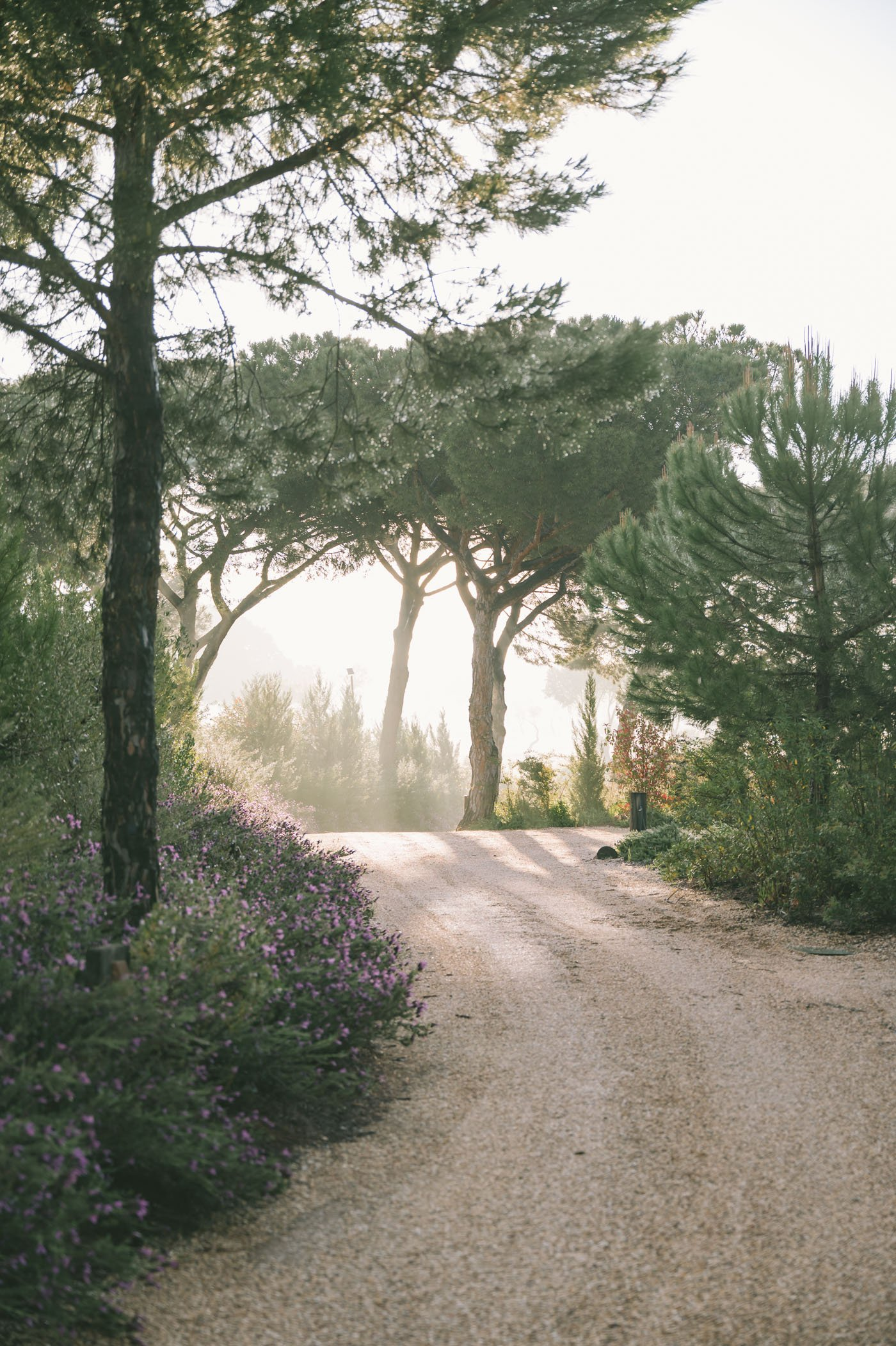 Road within the Sublime Comporta estate