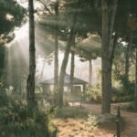 Sunrise at Sublime Comporta - with the sun shining through the pine trees