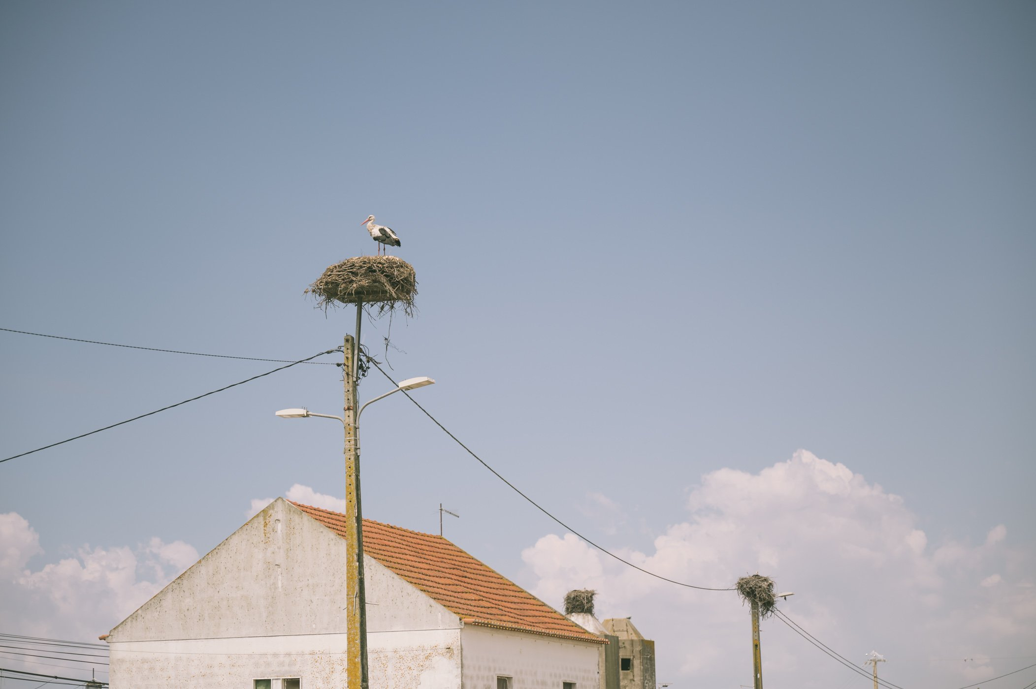 Storks nests are everywhere in the Alentejo region of Portugal