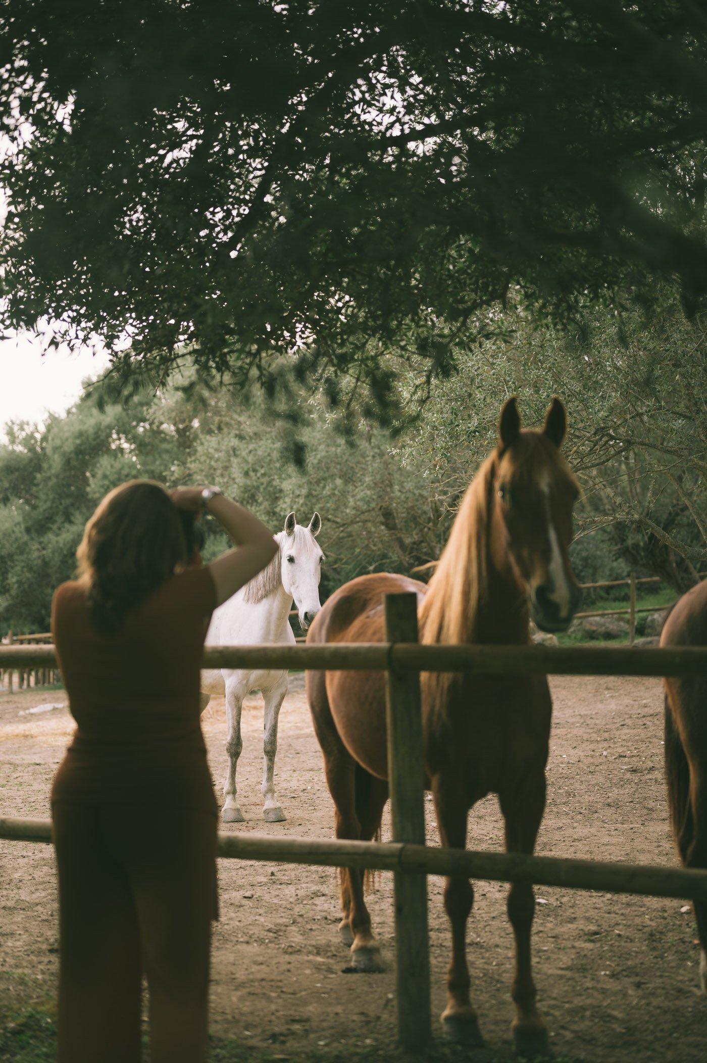 Horses at São Lourenço do Barrocal
