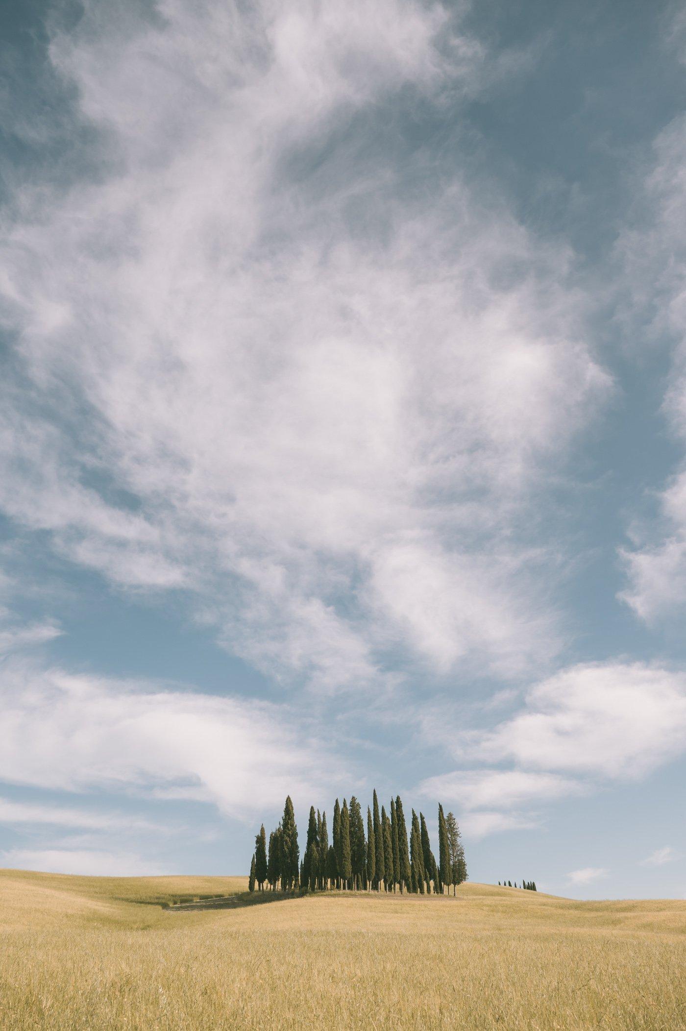 * Cipressi di San Quirico d'Orcia