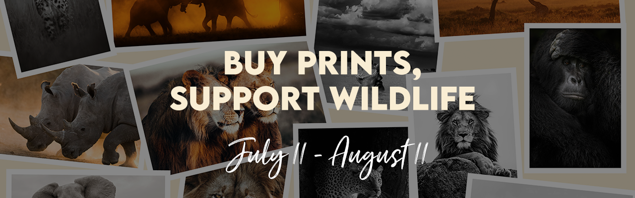 Prints for Wildlife 2021 - buy prints, support conservation